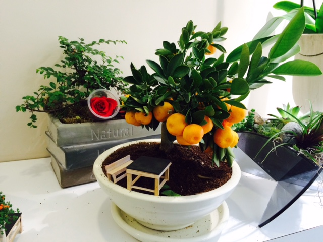 minyatür bonsai