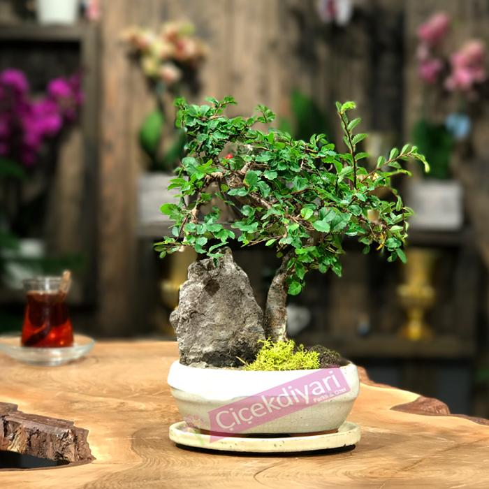 bonsai-agac-1