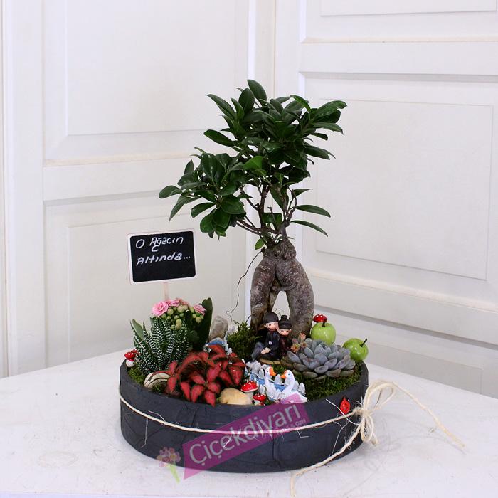 bonsai-agac-2