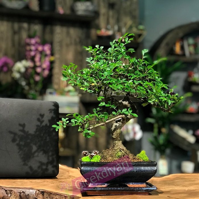 bonsai-yetistirirken-dikkat