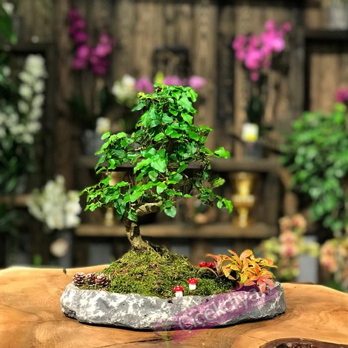 bonsai-yetistirmek-kolay-mi