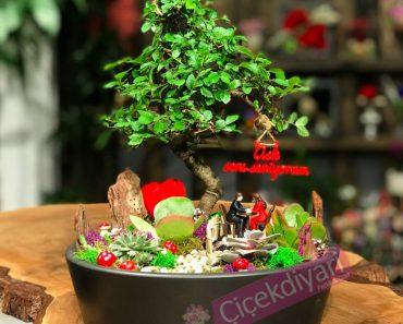 tohumdan-bonsai