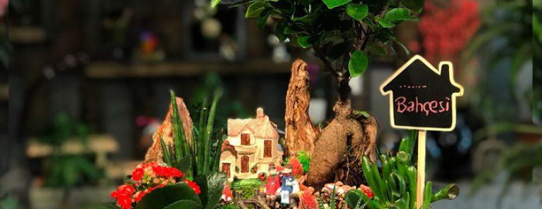 yapay-bonsai