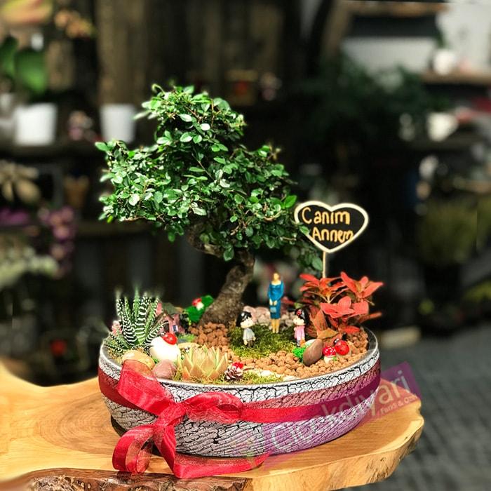 anneler-gunu-icin-bonsai