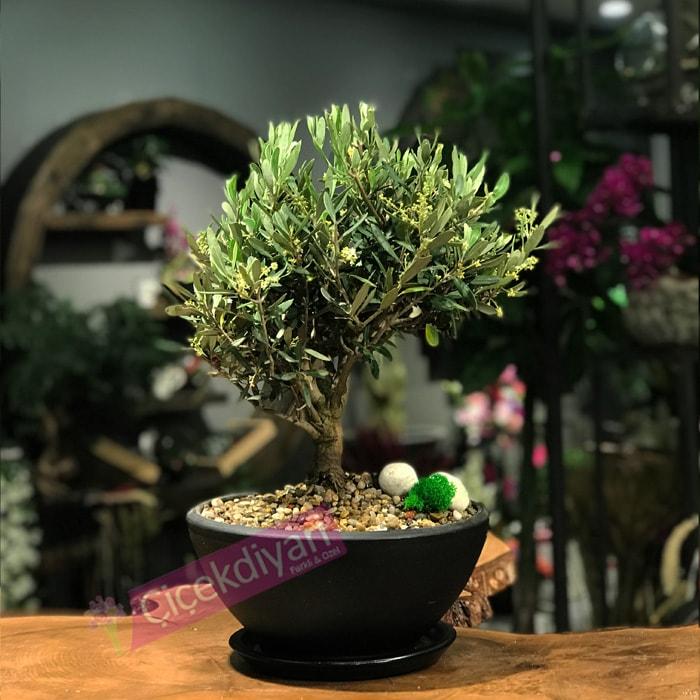 bonsai-1