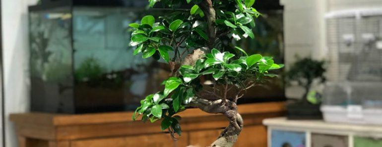 ofis-bonsai