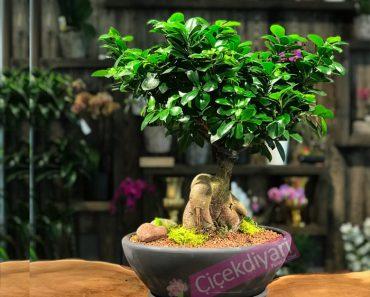 bahcede-yetistirilen-bonsai