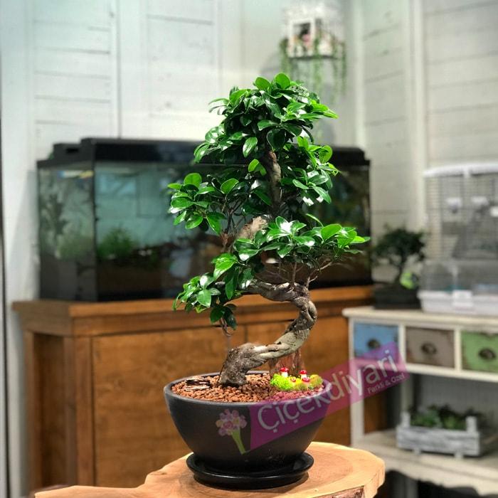 bonsai-nasil-budanir