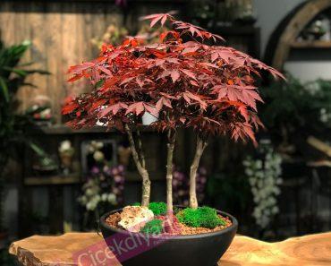 bonsai-saksisi-nasil-degismeli