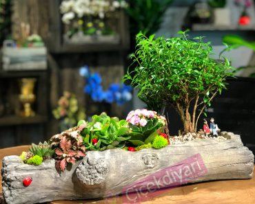 bonsai-yetistirme-teknikleri