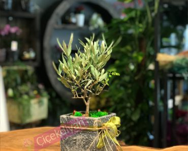 arkadasa-bonsai-gonderilir-mi