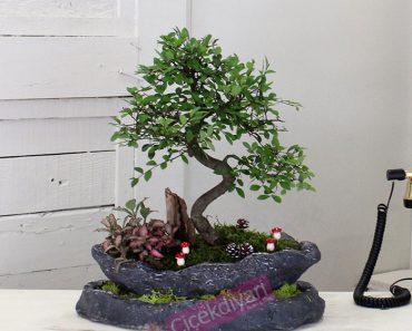bonsai-agaci-nasil-yetistirilir