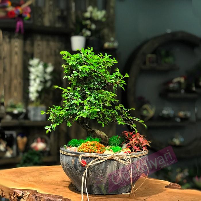bonsai-aranjmani