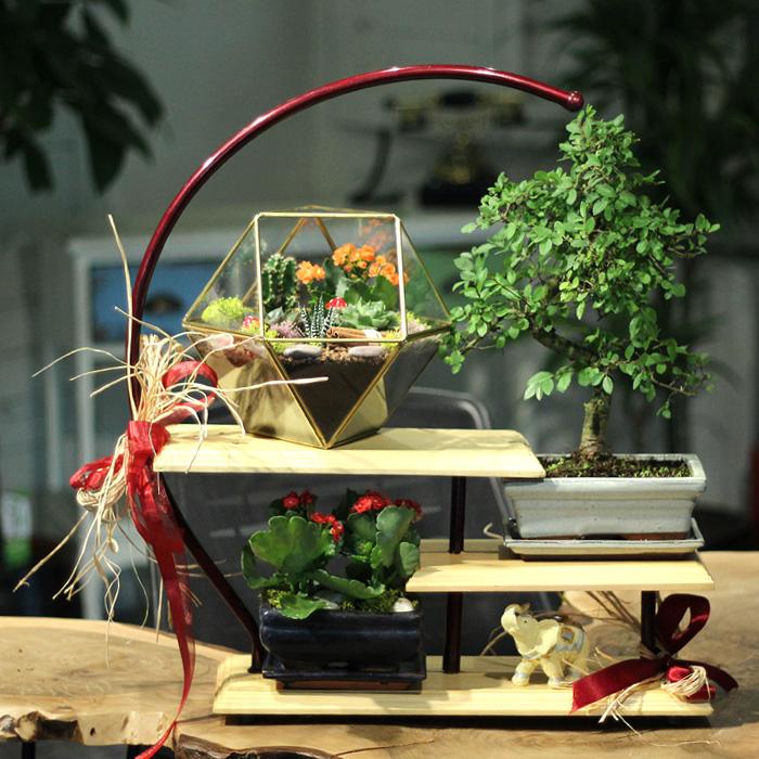sevdiklerinize-bonsai