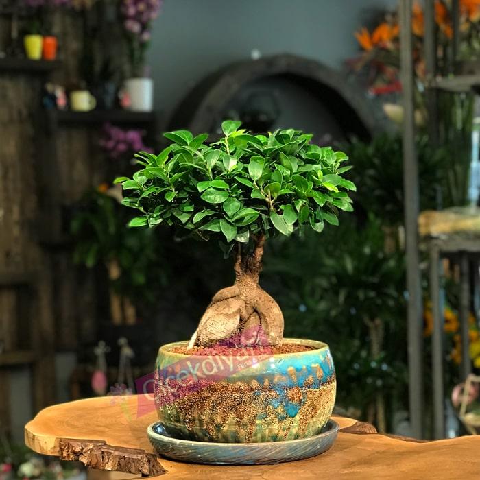 bonsai-agaci-ne-kadar-sulanir