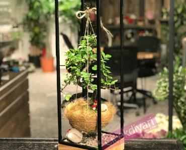 bonsai-kokedama-agaci