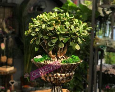 yapay-bonsai-agaci-var-mi