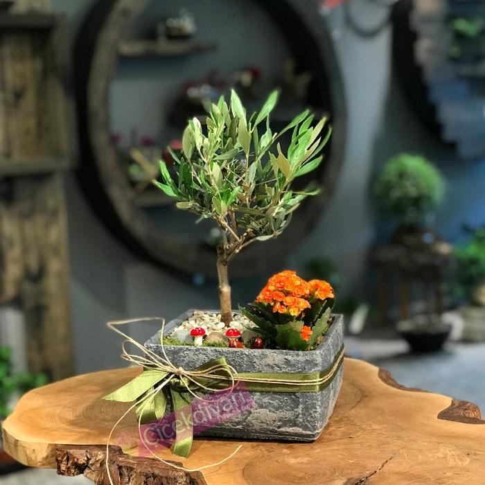 yeni-yil-bonsai-agaci