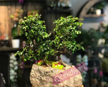 sevgiliye-alinacak-bonsai-agac