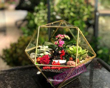 terarium-bonsai-agaci-kime-alinir