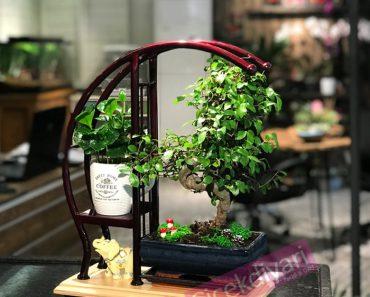 bonsai-kahve-sehpadabonsai-bonsaisiparis-cicekyolla-ciceksepeti-bonsaigonder-resim-min