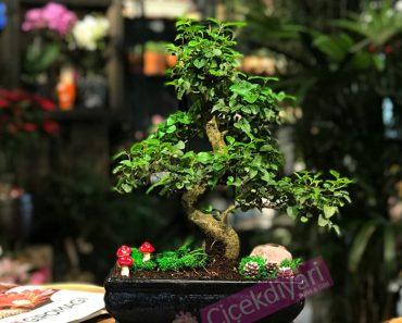 sagaretiabonsai-bonsaisiparis-bonsaiagac-ciceksepeti-cicekyolla-resim-min