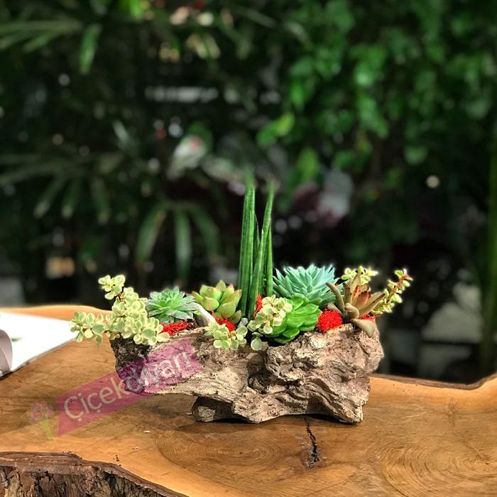 sevgililer-gunu-bonsai-agaci
