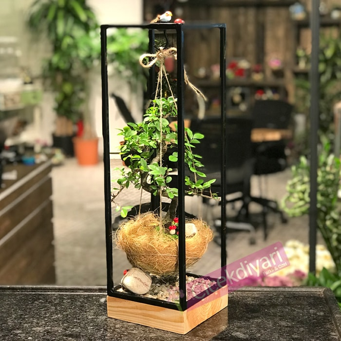soguga-dayanikli-bonsai-cicekleri