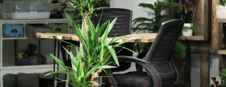 tropikal-salon-cicekleri