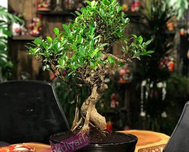 buro-bitkileri
