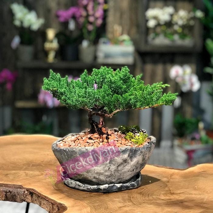canli-cicek-bonsai