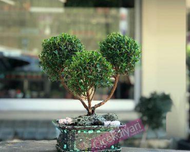 en-guzel-bonsai-agaclari
