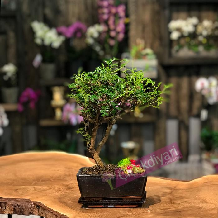 japon-cicegi-bonsai