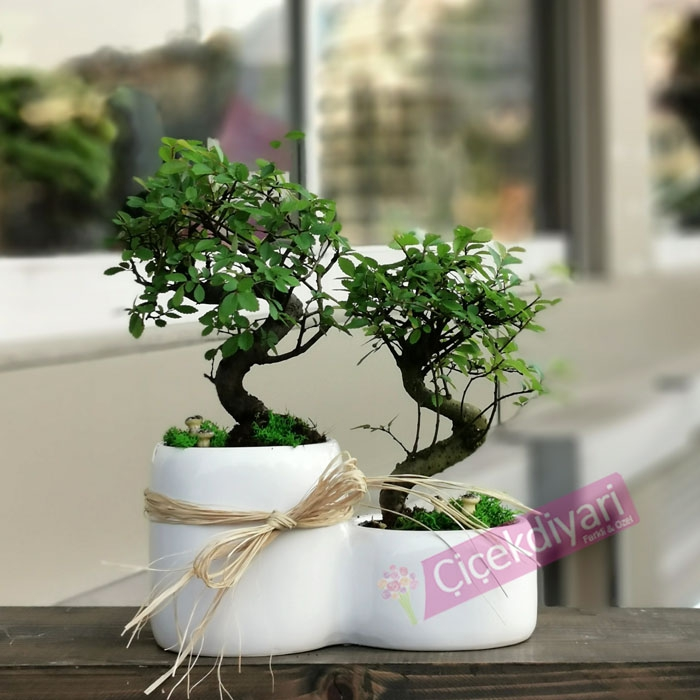 bonsai-hangi-agaclardan-olur