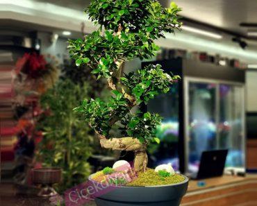 meraklisi-icin-bonsai-yetistirme-rehberi