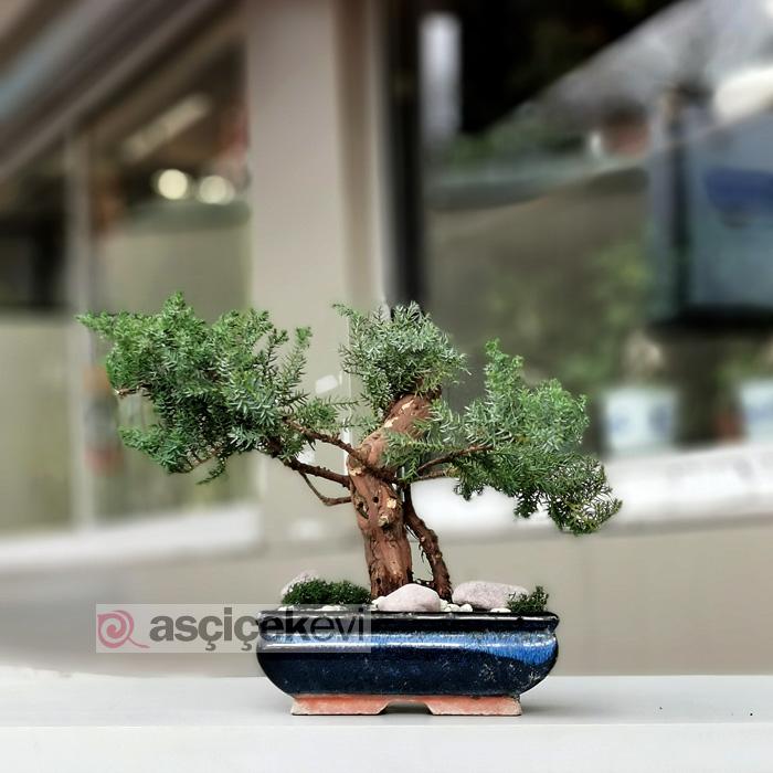 ardic-bonsai-agaci-fiyatlari