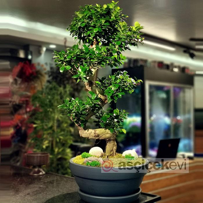 bonsai-agaci-felsefesi