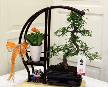 bonsai-aranjmanlari