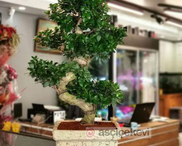 kac-cesit-bonsai-vardir